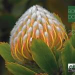 Bonny Doon CERT 2016 Calendar - Cover